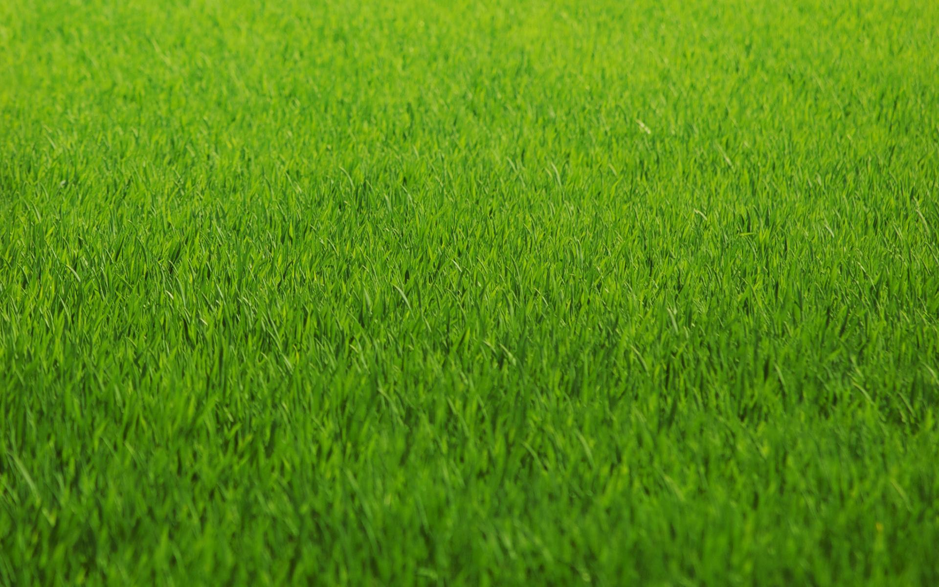 Textura de Grass - 1920x1200
