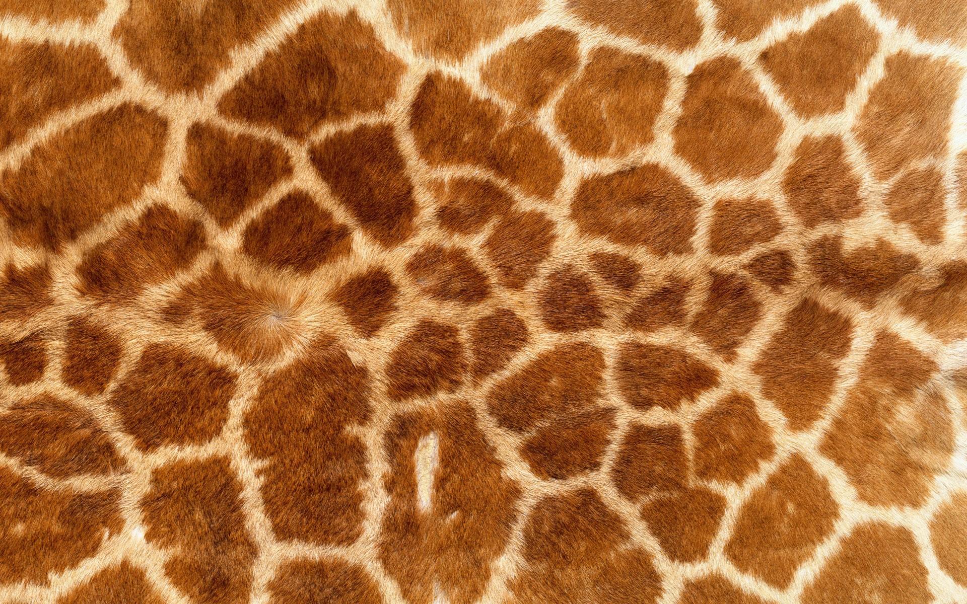 Textura de pieles de jirafas - 1920x1200