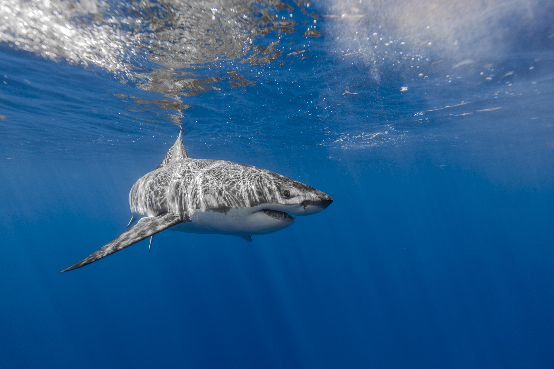 Tiburón en aguas poco profundas - 5760x3840