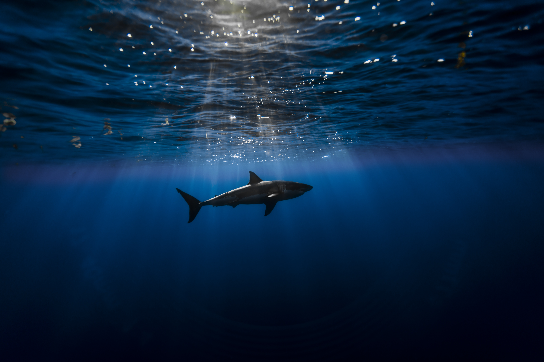 Tiburón en el océano - 5760x3840