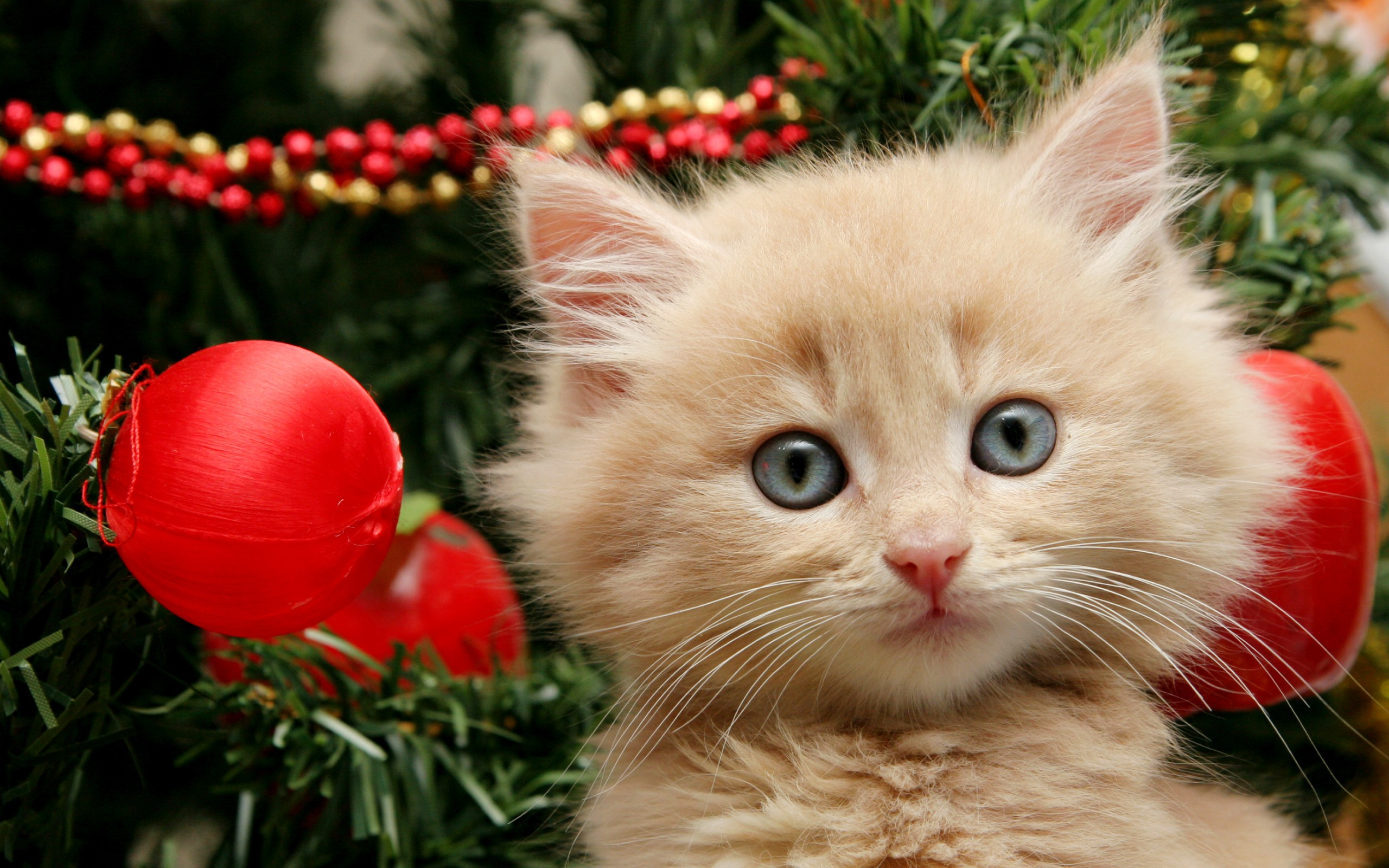 Tierno gatito jugando en arbol de navidad - 2560x1600