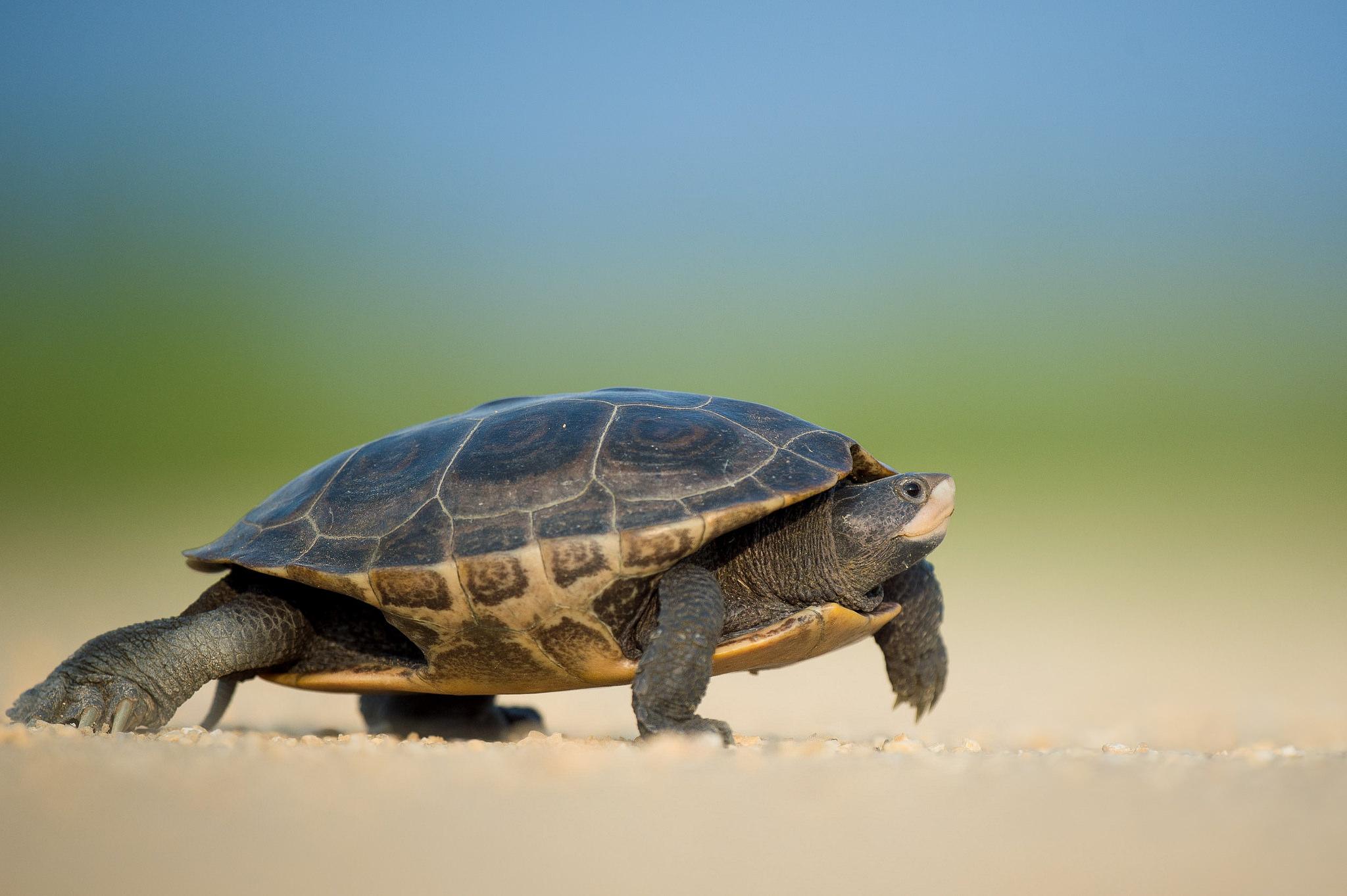 Tortuga corriendo - 2048x1363