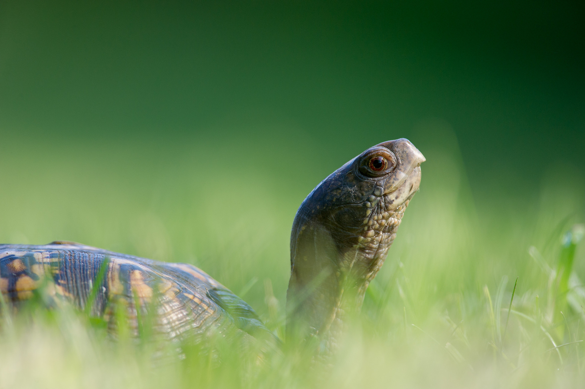 Tortuga en el jardín - 2048x1363
