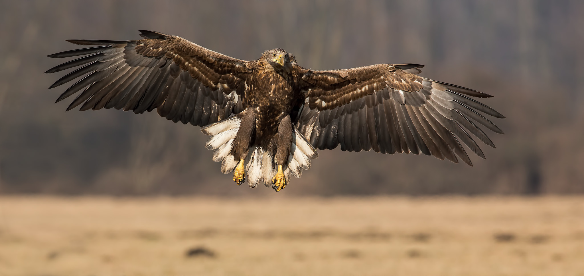 Un águila con las alas extendidas - 2048x971