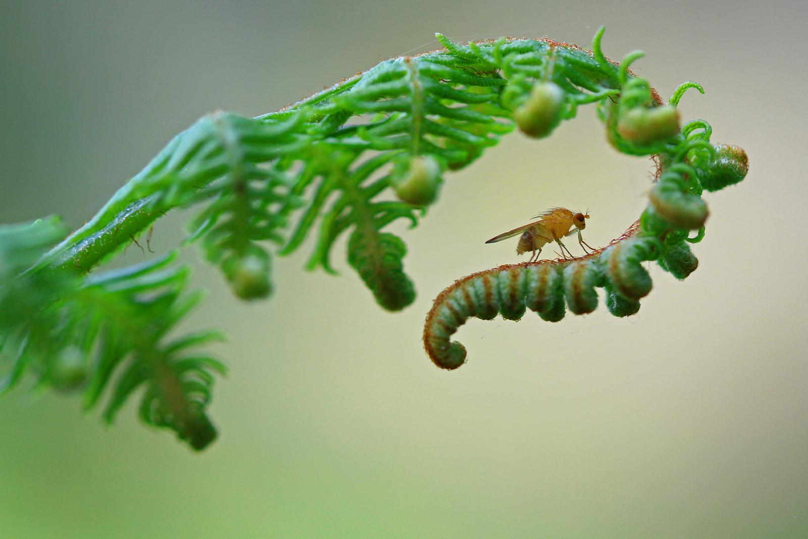 Un bello insecto - 1600x1067