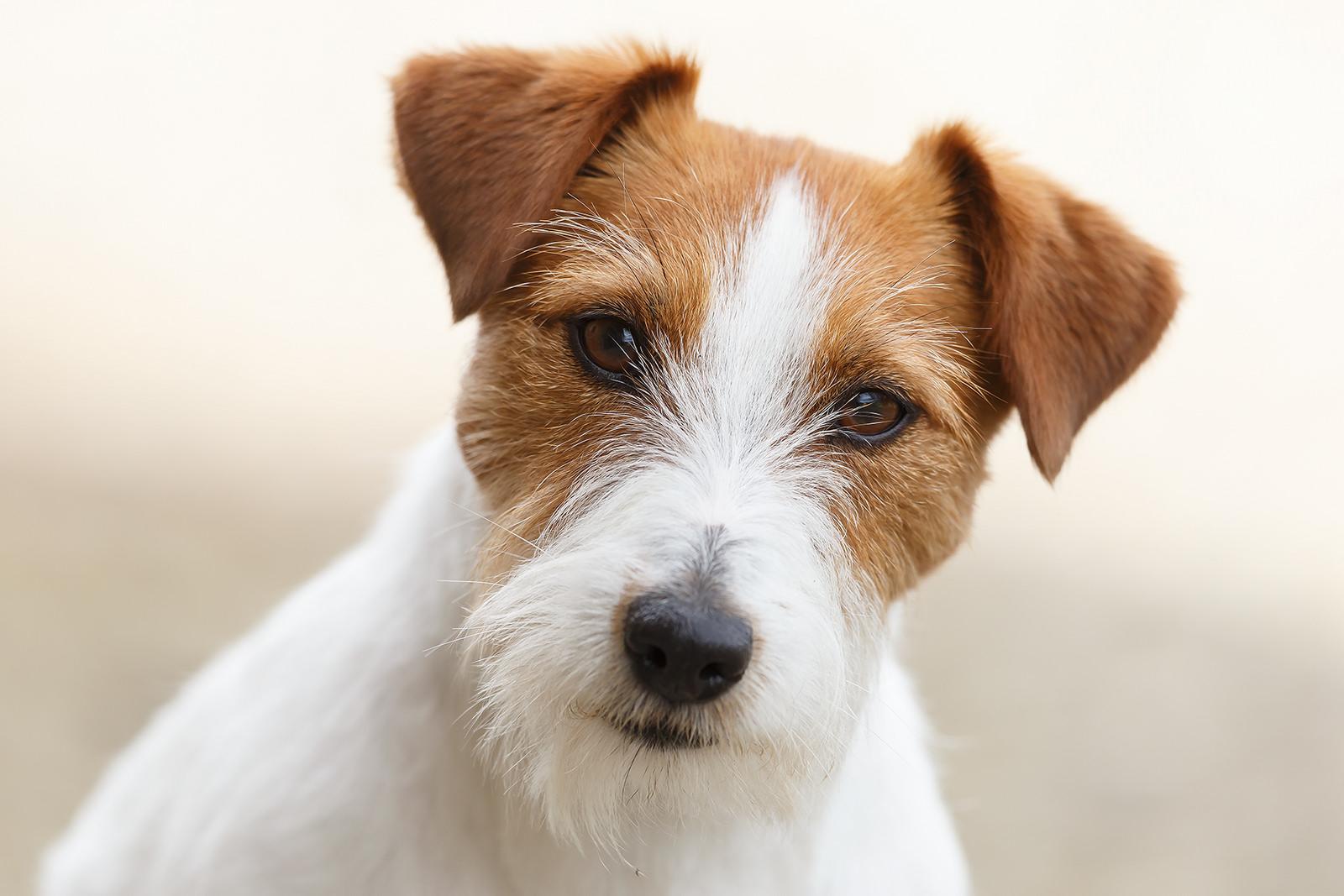 Un bello perro - 1600x1067