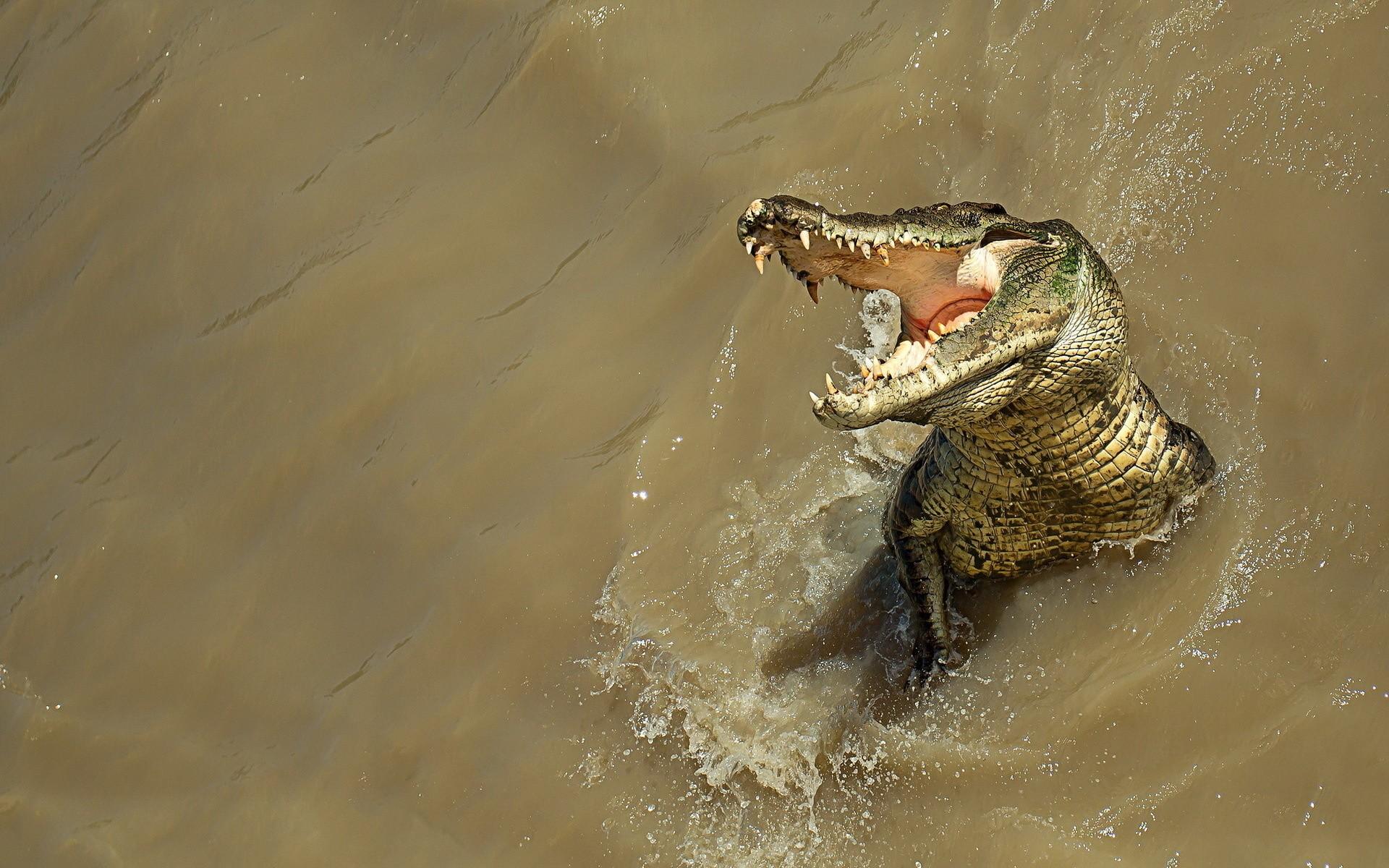 Un cocodrilo en el rio - 1920x1200