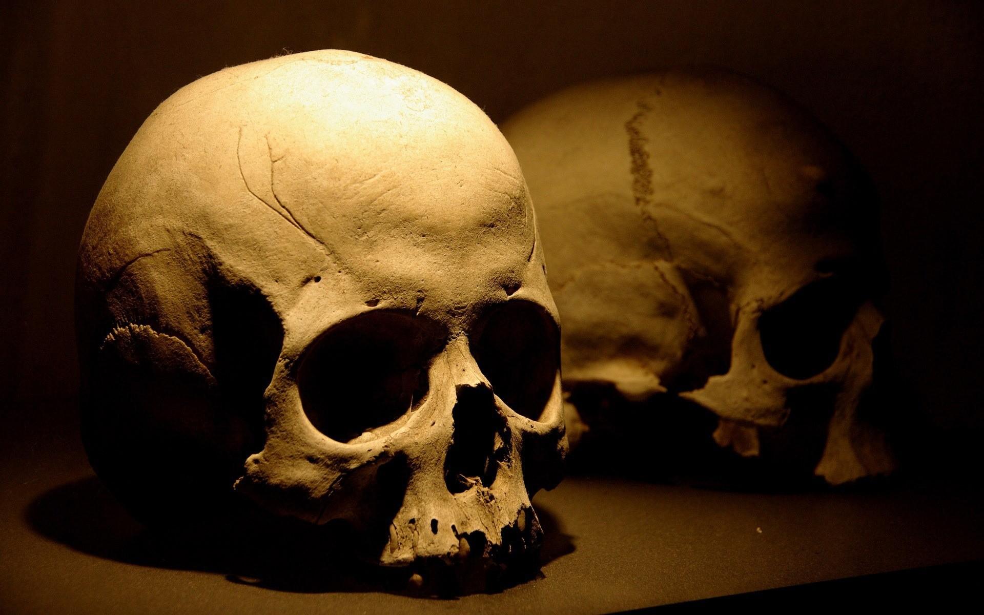 Un cráneo - 1920x1200