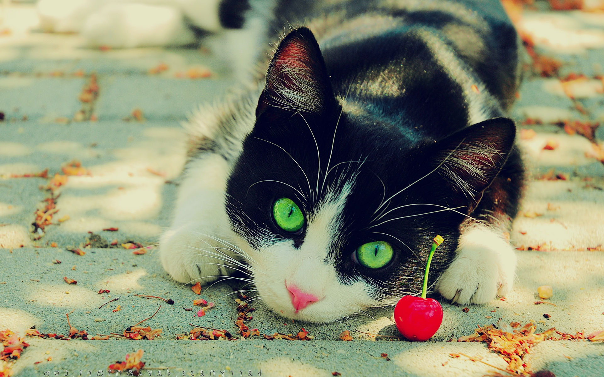 Un gatito curioso - 1920x1200