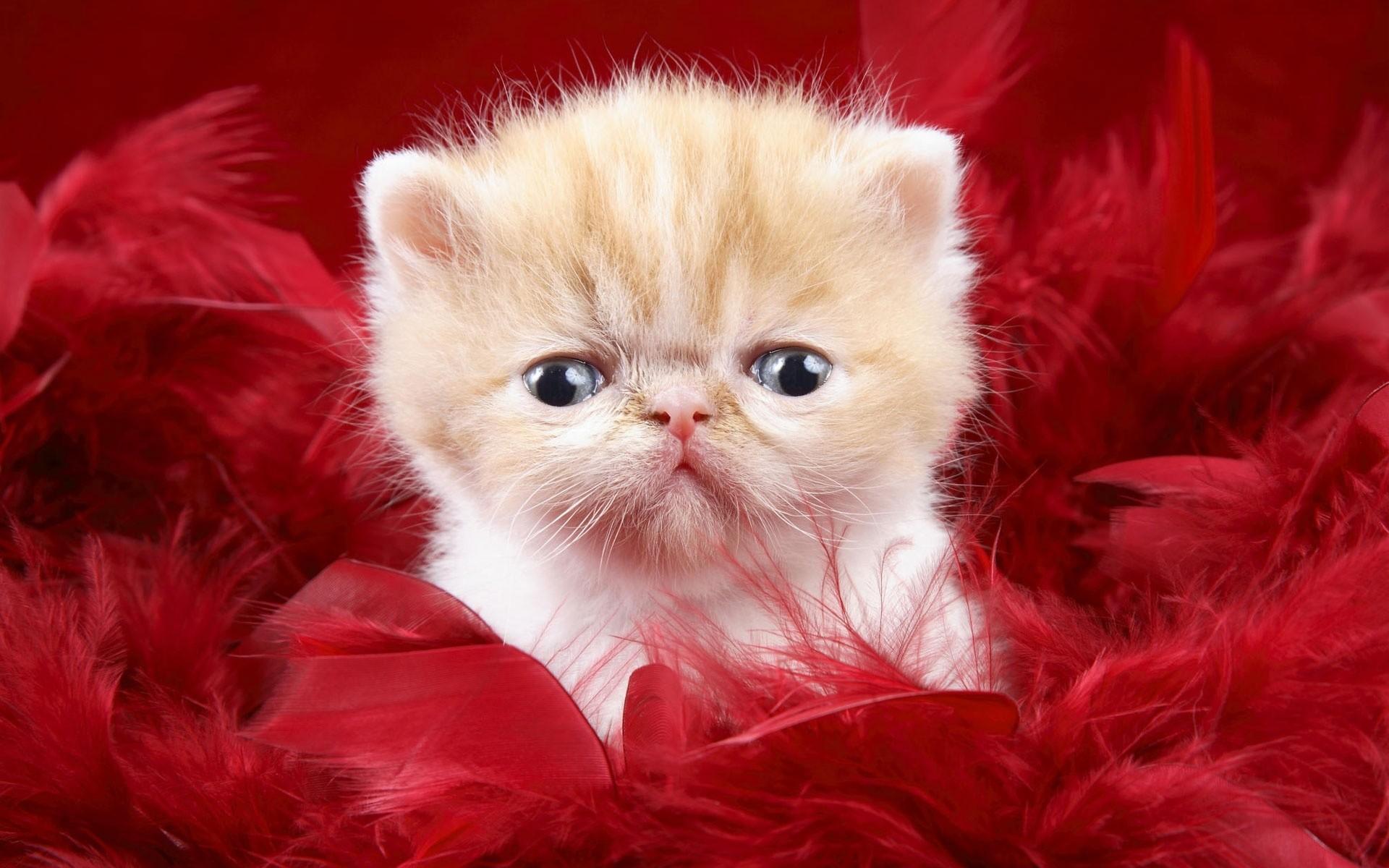 Un gatito feo - 1920x1200