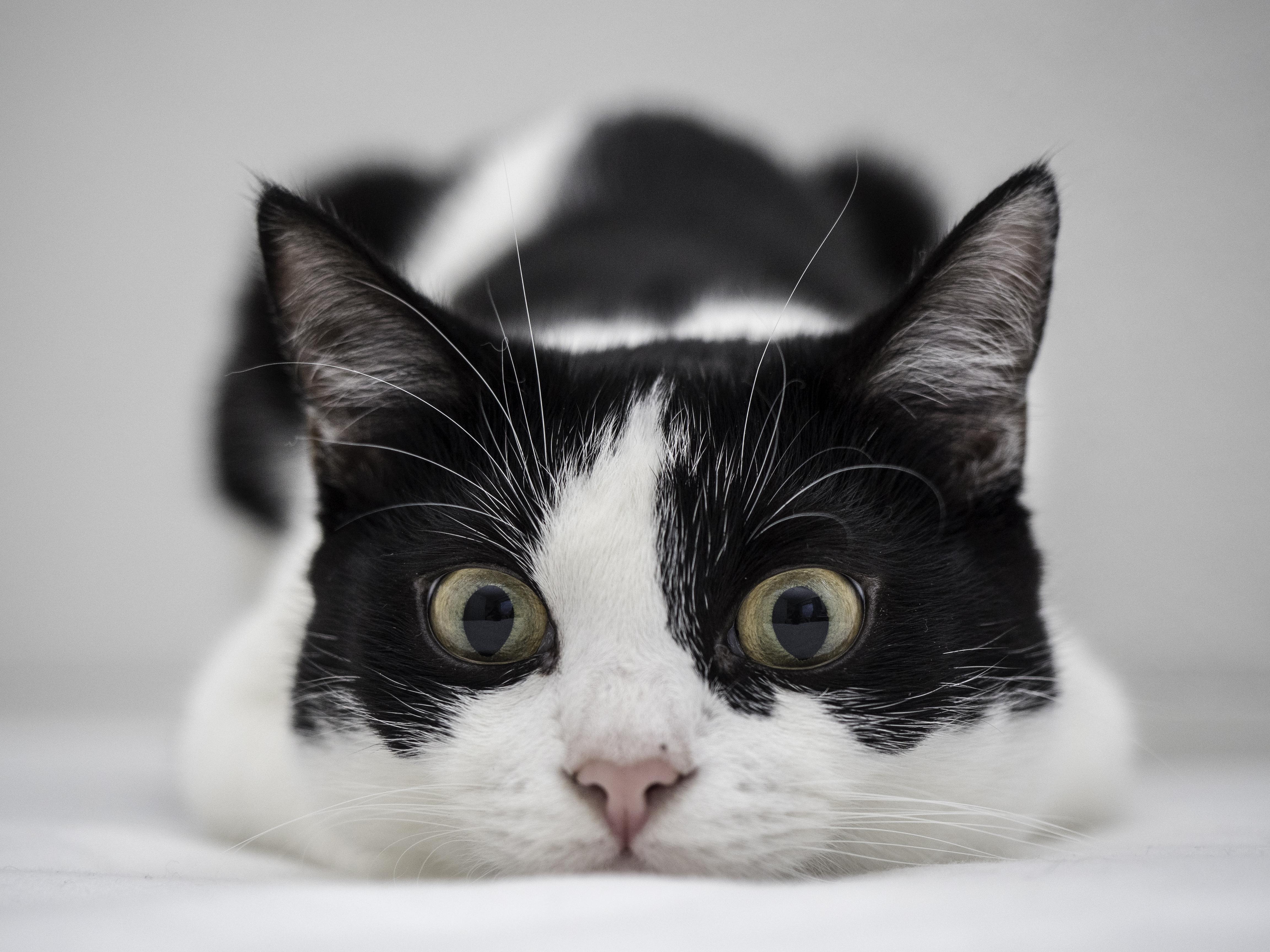 Un gato blanco y negro - 4608x3456
