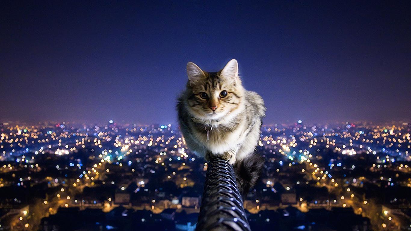 Un gato en la altura - 1366x768