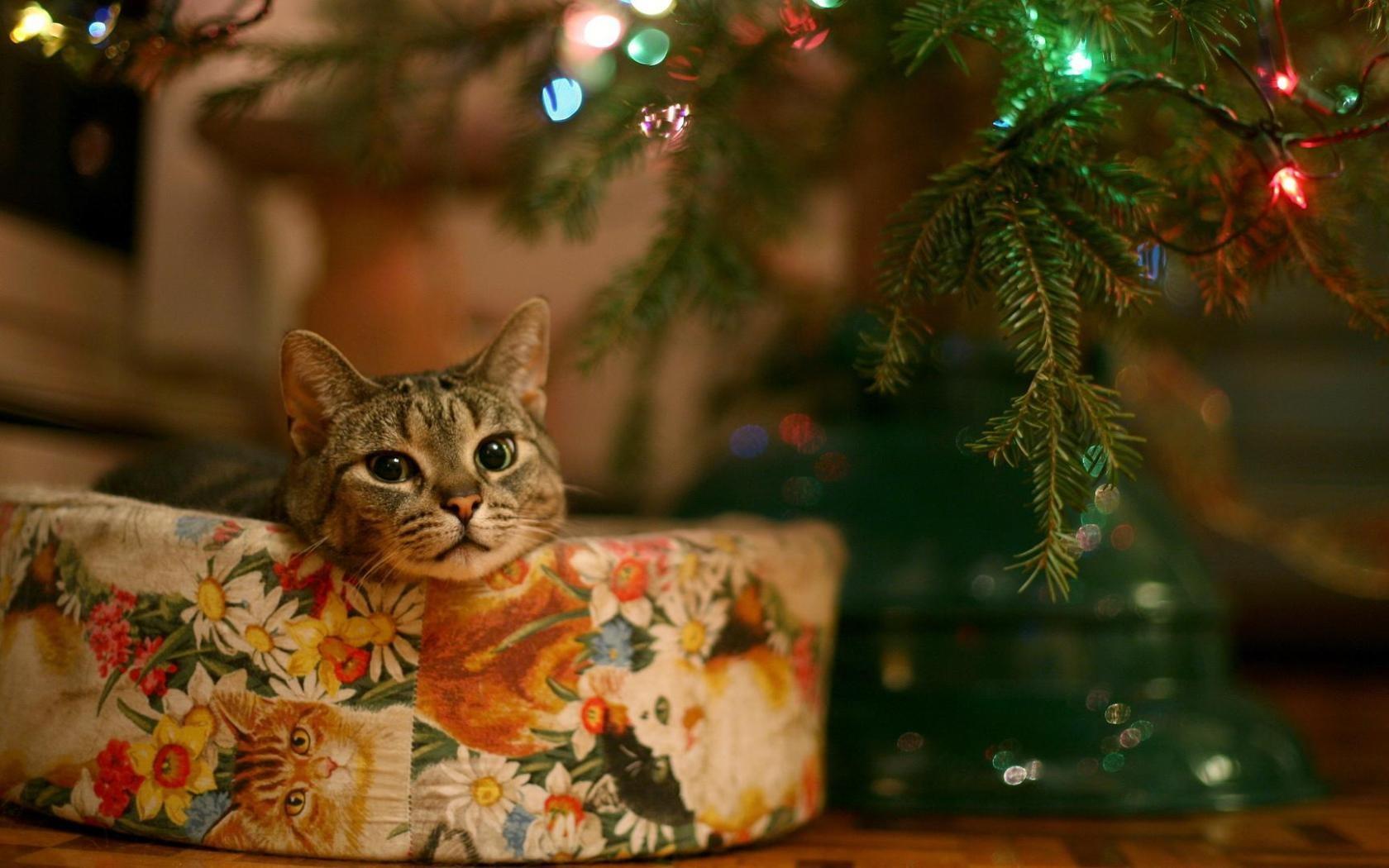 Un gato junto al arbol de navidad - 1680x1050