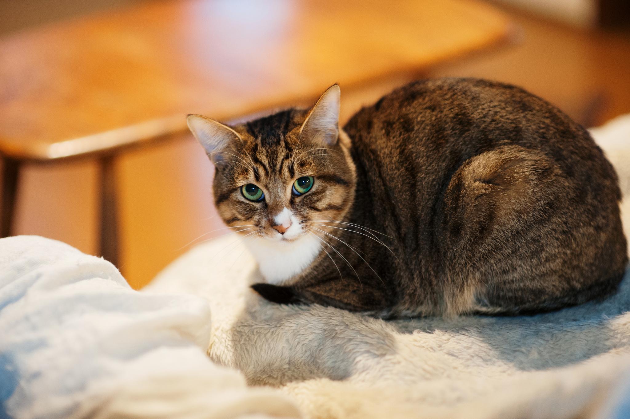 Un gato mirandote - 2048x1363