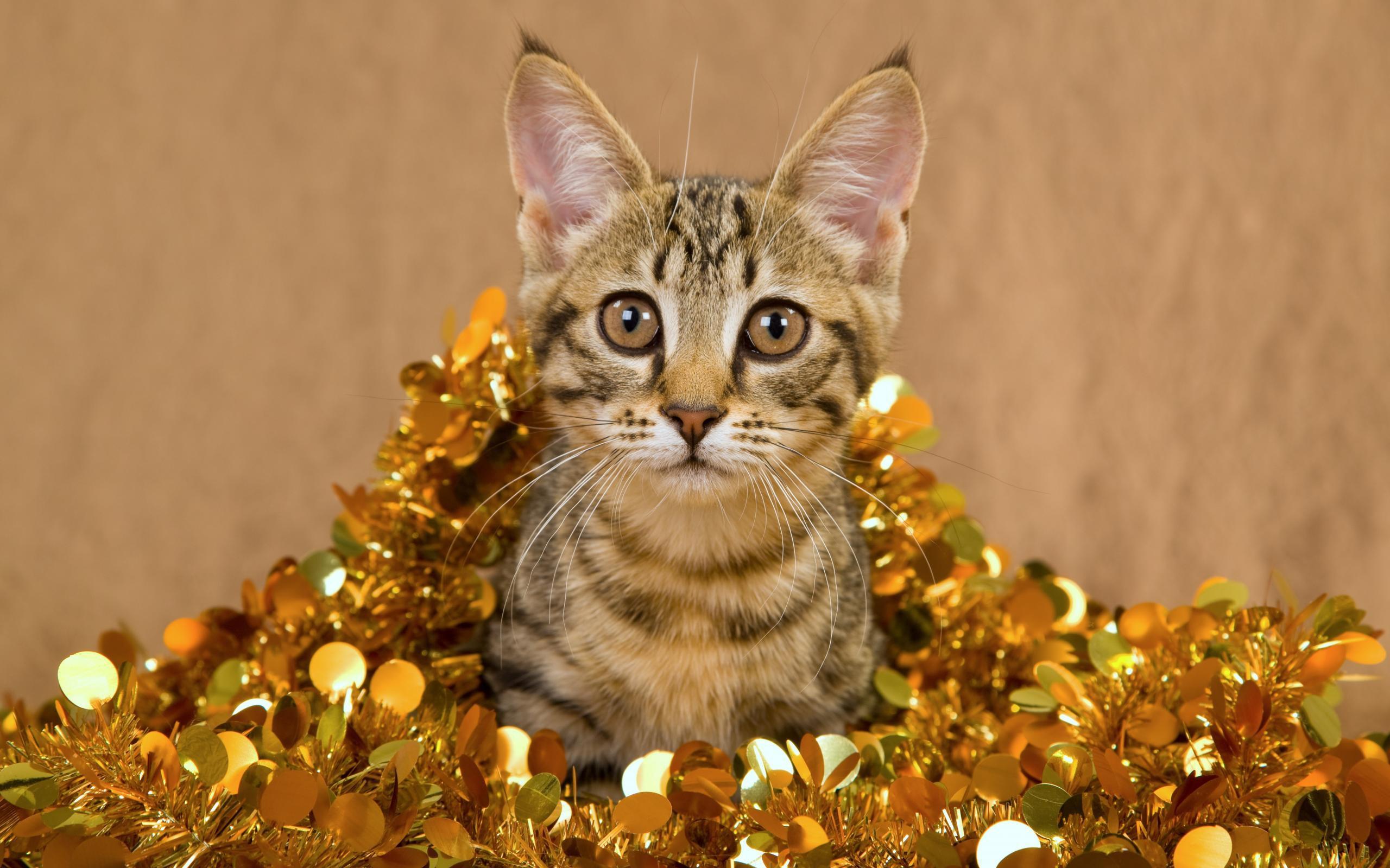 Un gato muy bonito - 2560x1600