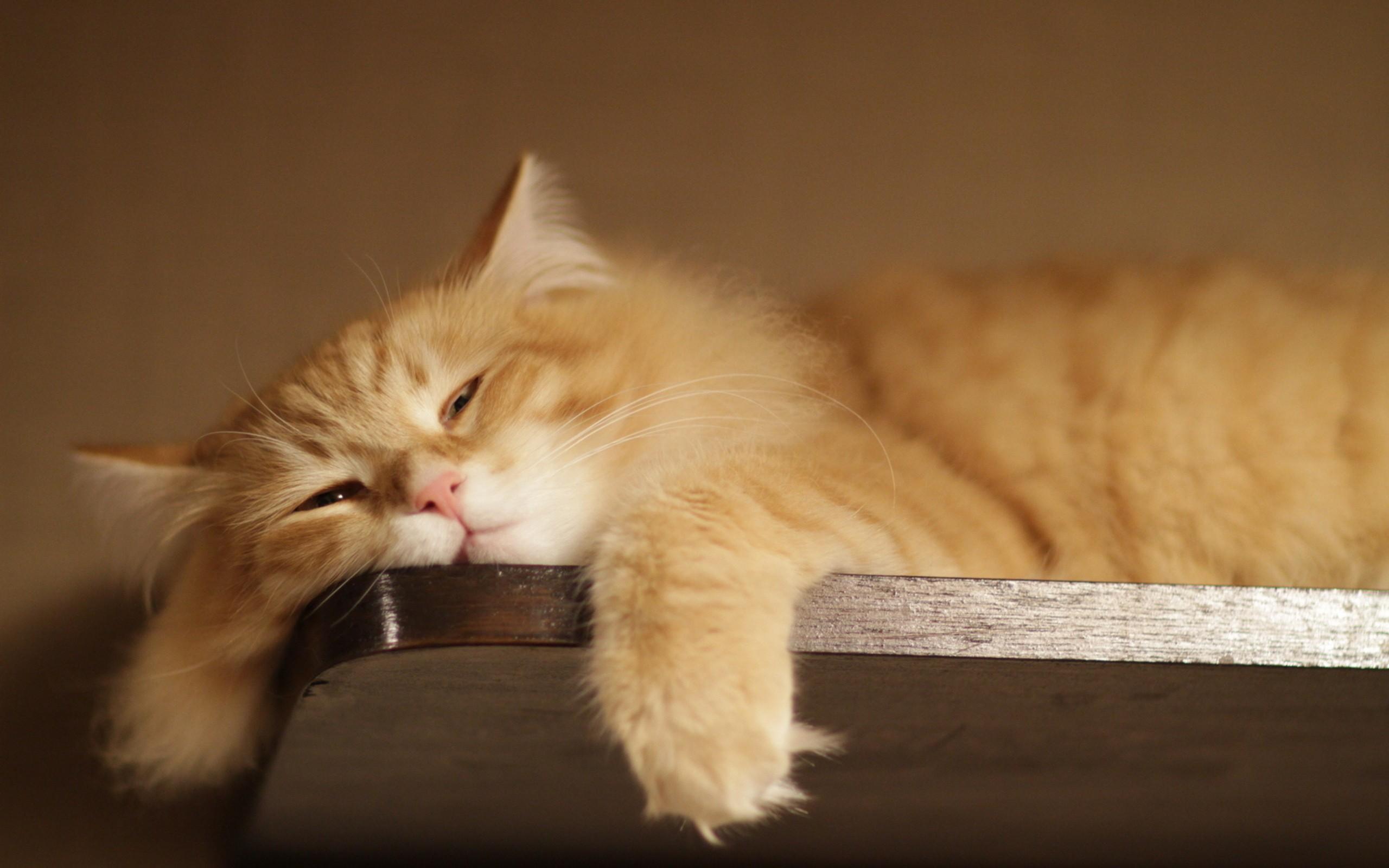 Un gato perezoso - 2560x1600