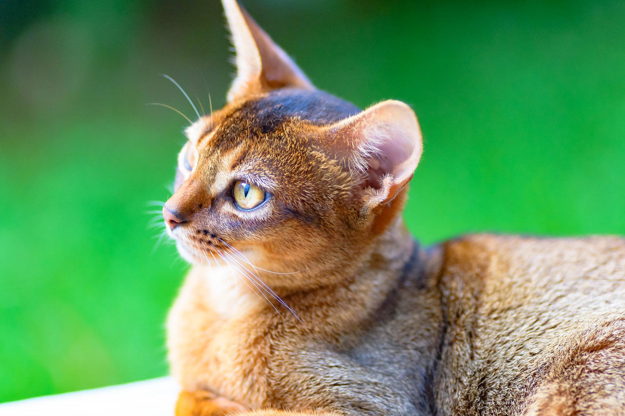 Un gato puma - 2048x1363