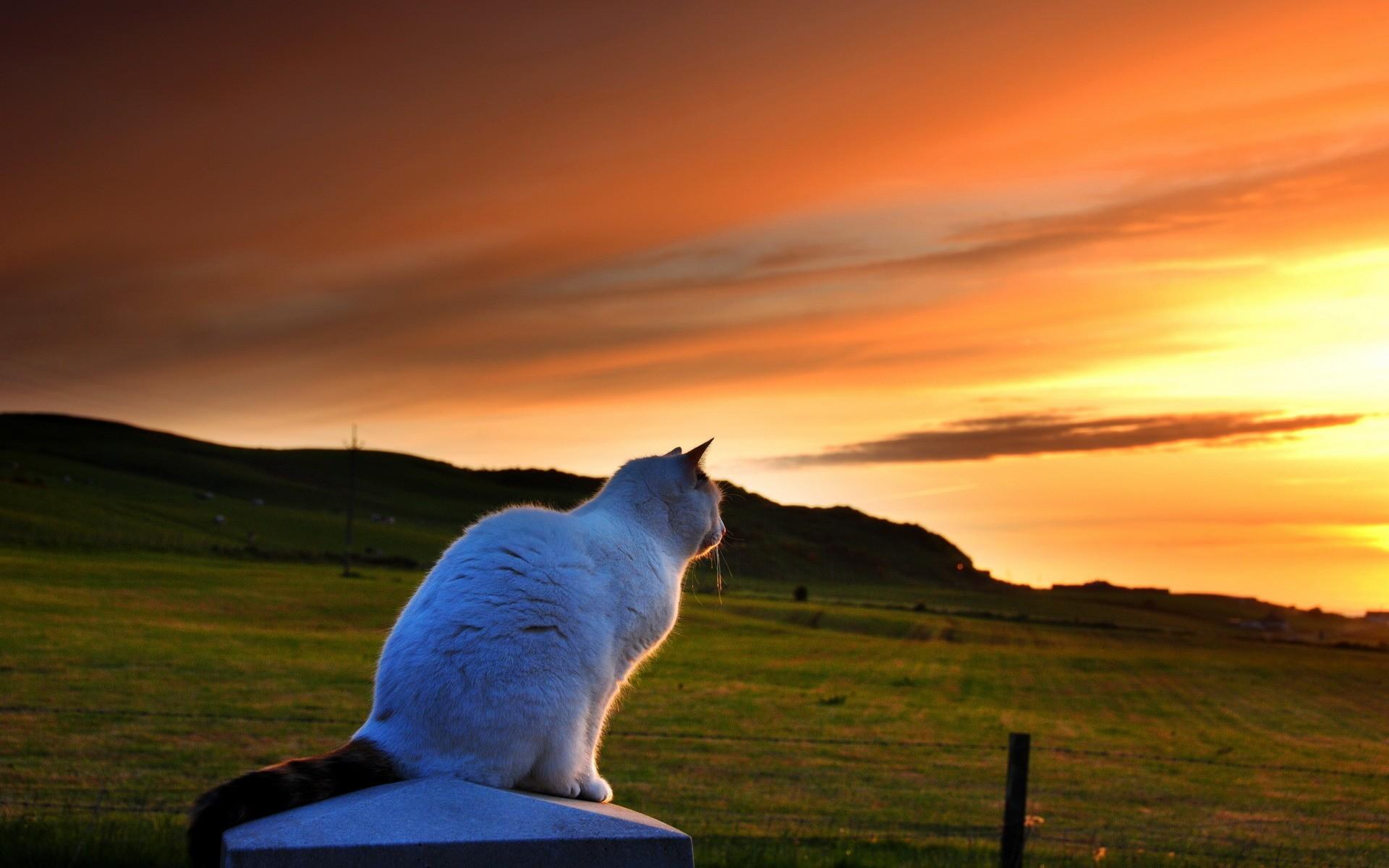 Un gato viendo el atardecer - 1920x1200