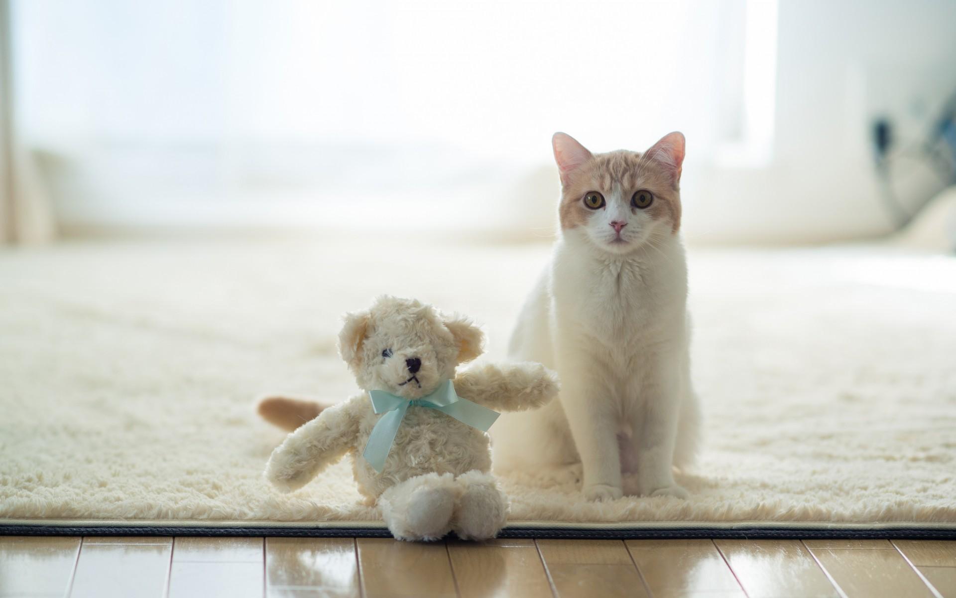 Un gato y su peluche - 1920x1200