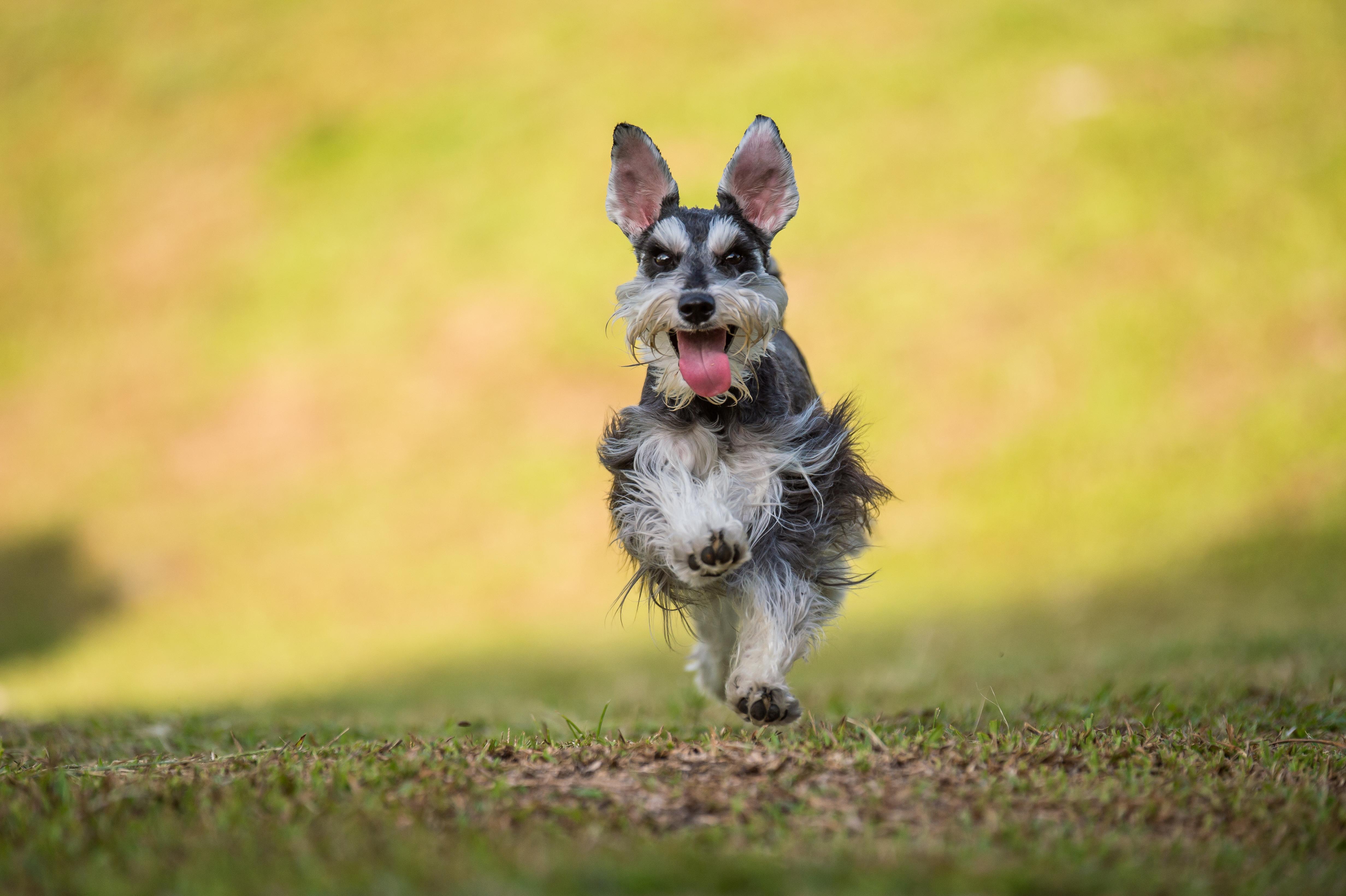 Un perro saltando - 4928x3280
