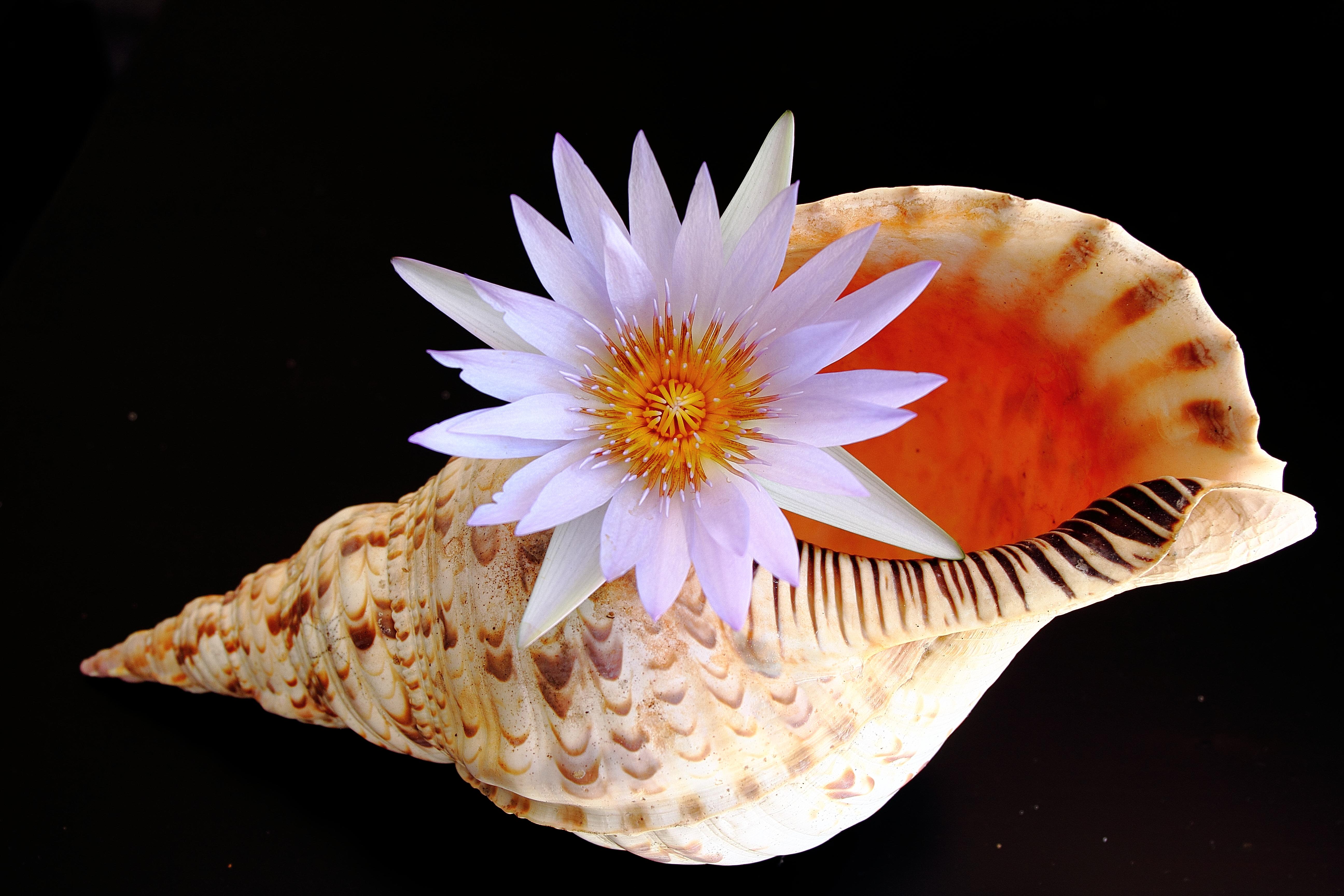 Una concha y una flor - 5184x3456