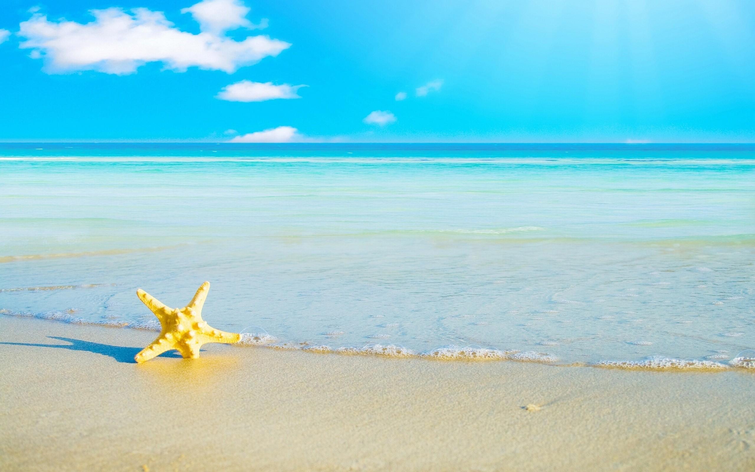 Una estrella en la playa - 2560x1600