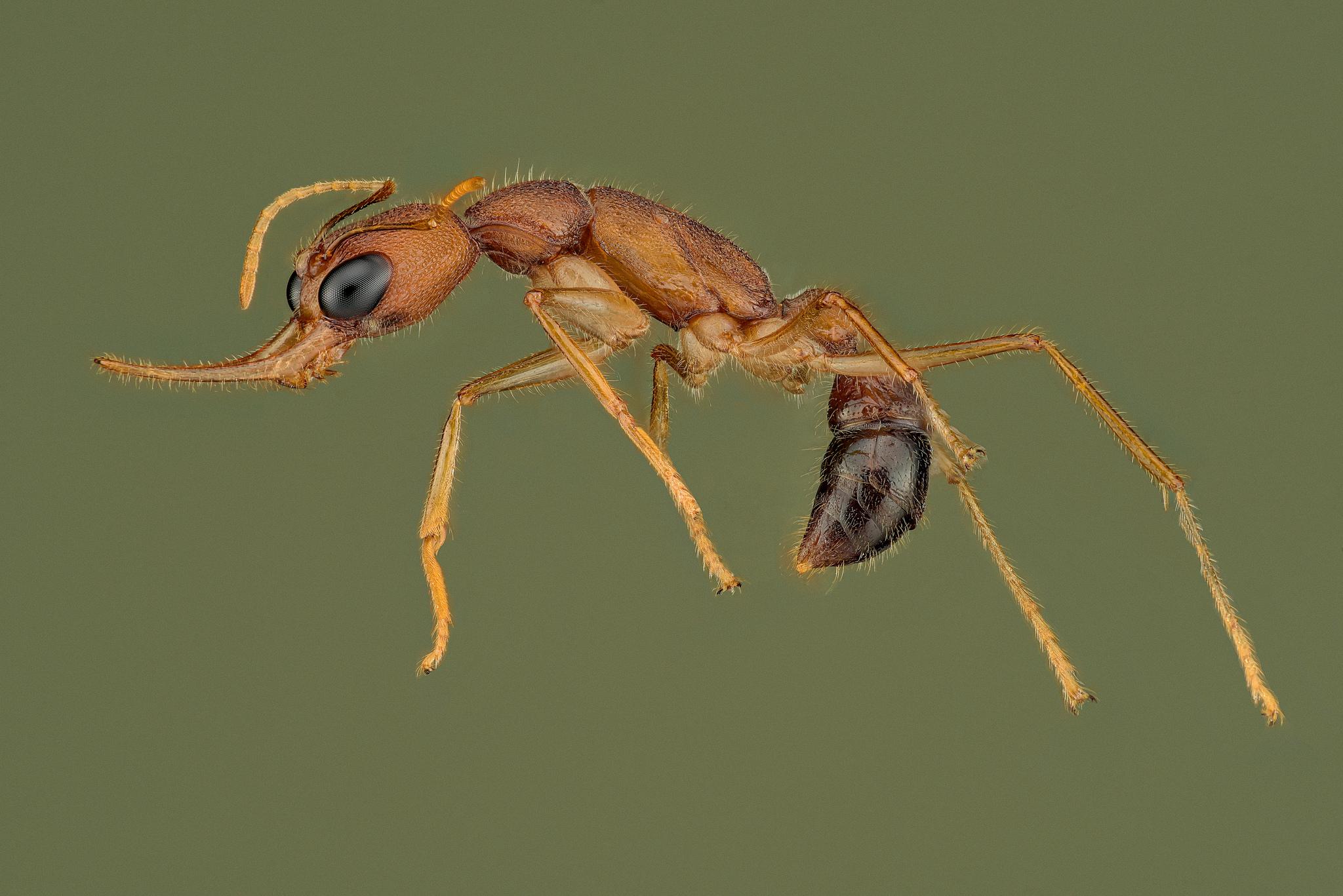 Una hormiga saltando - 2048x1367