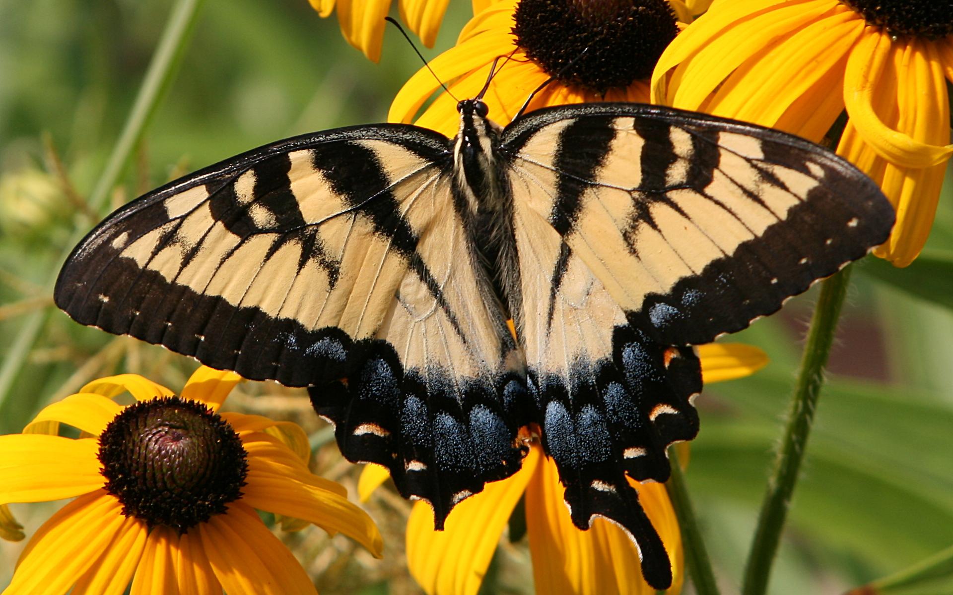Una linda mariposa - 1920x1200