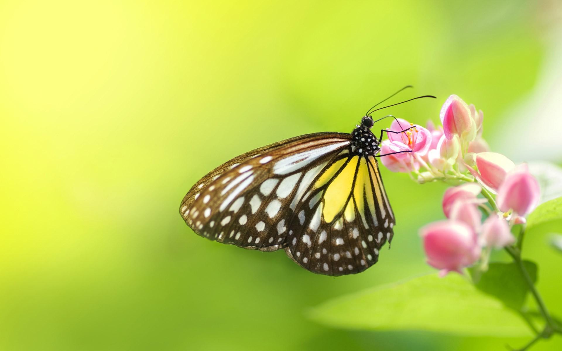 Una mariposa en una flor - 1920x1200