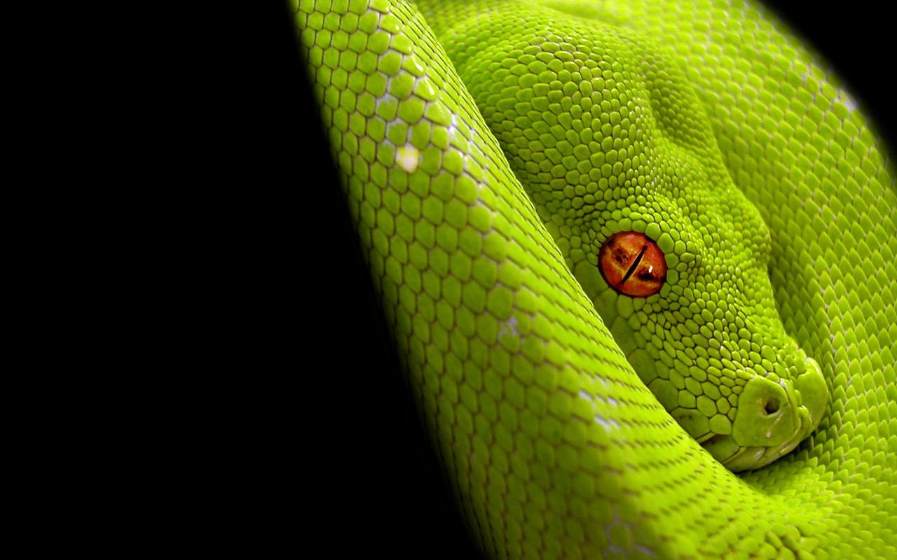 Una serpiente verde - 1280x800