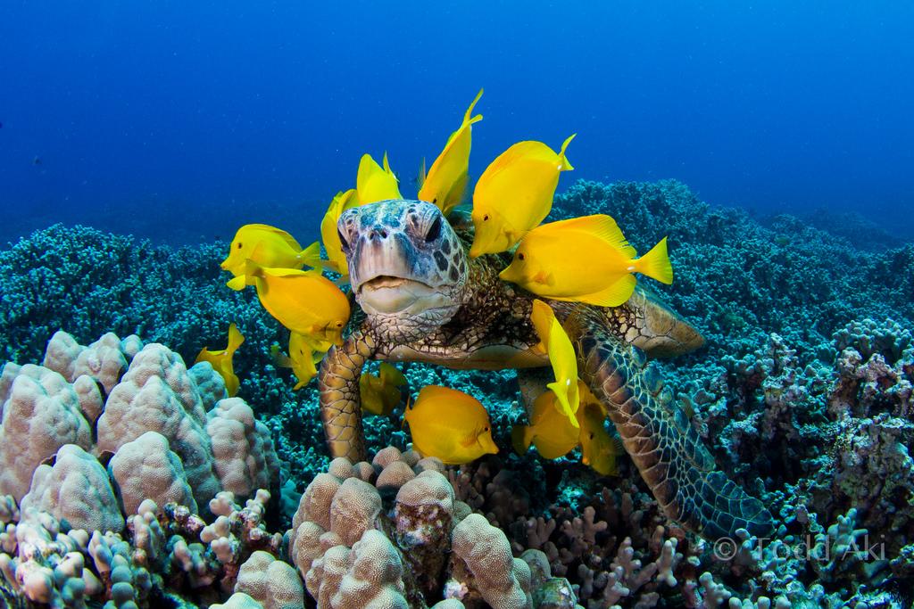 Una tortuga marina - 1024x683