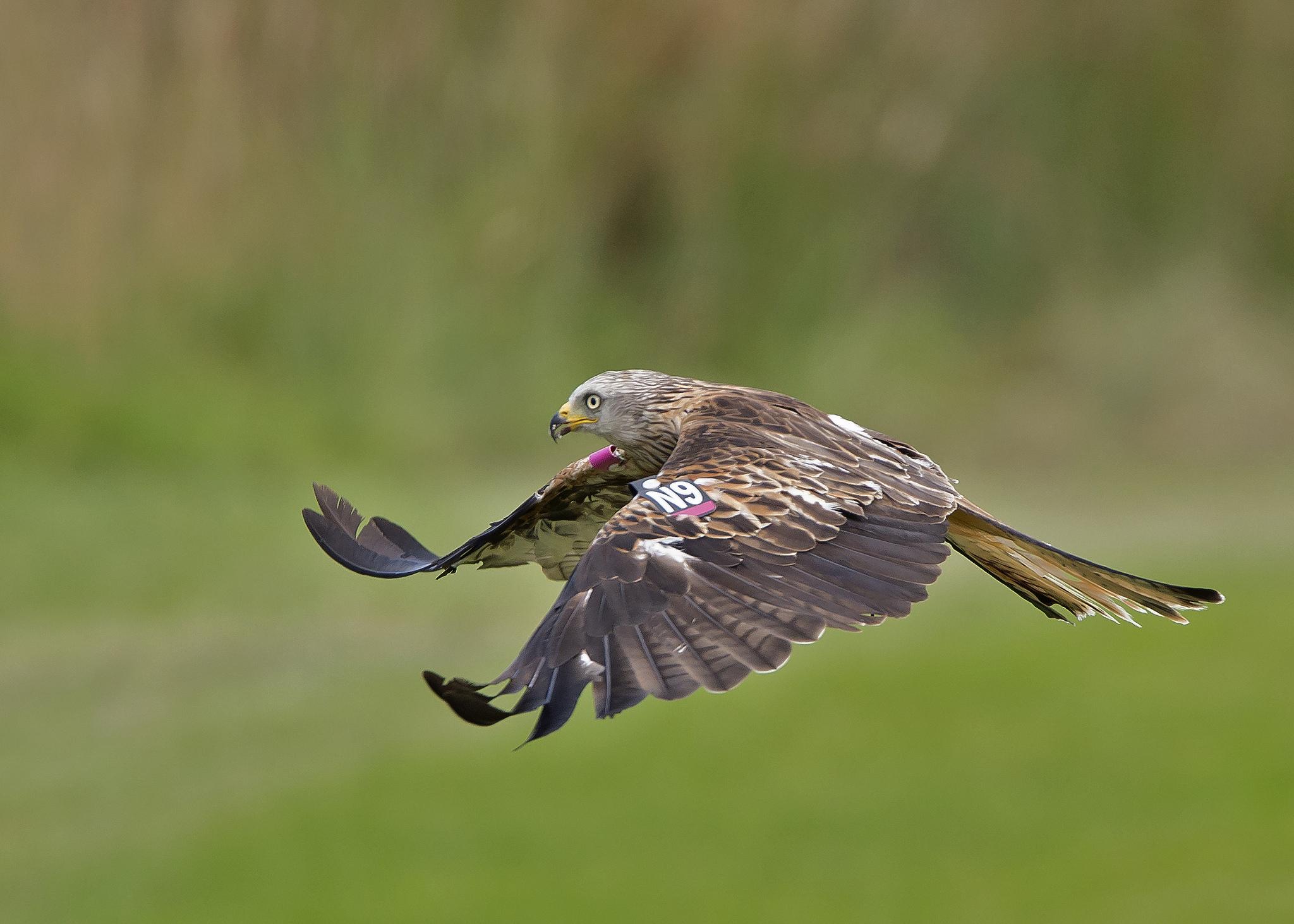 Vuelo de un Aguila - 2048x1463