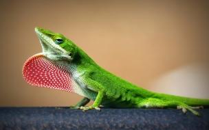 Una lagartija verde