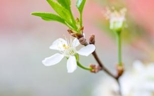Una hermosa flor blanca