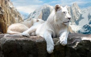 Leon blanco