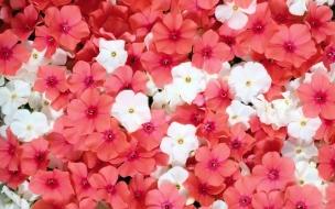 Flores blanca y rojas
