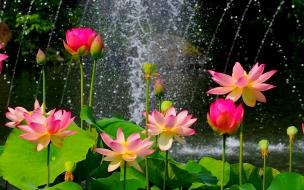Flores en parque
