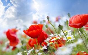 Flores blancas y rojas