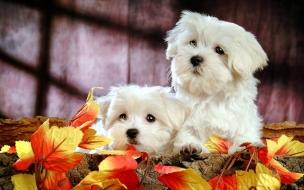 Cachorros blancos