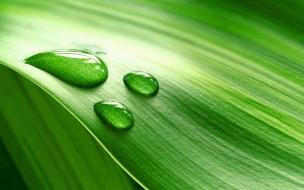 Hoja verde y gotas de agua