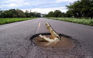 Un cocodrilo en la pista