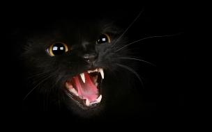 Un gato negro enfurecido
