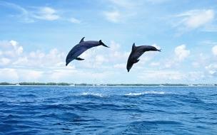 Salto de delfines