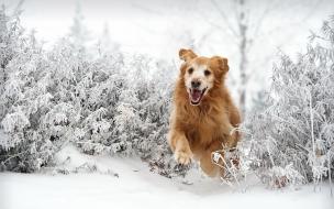 Perro saltando en la nieve