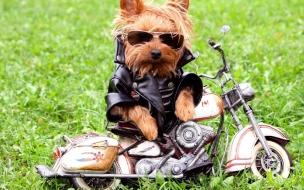 Fotos graciosa de perros
