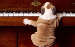 Perro tocando piano
