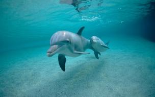 Un delfin y su cria