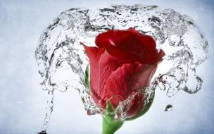 Una flor en el agua