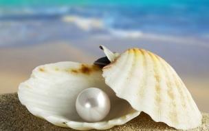 Perla de una concha