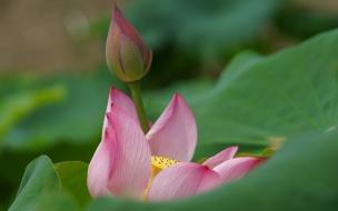 Nacimiento de flor